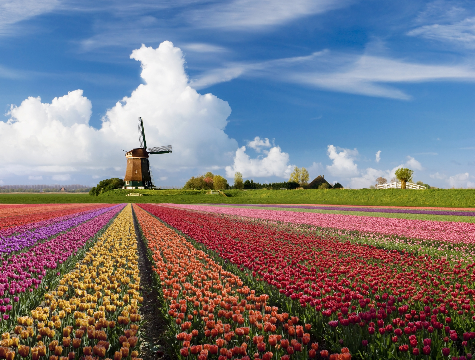 Welcome To Holland Our Sweet Life As We Live It