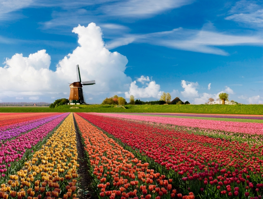 Landschap Holland Tulpen